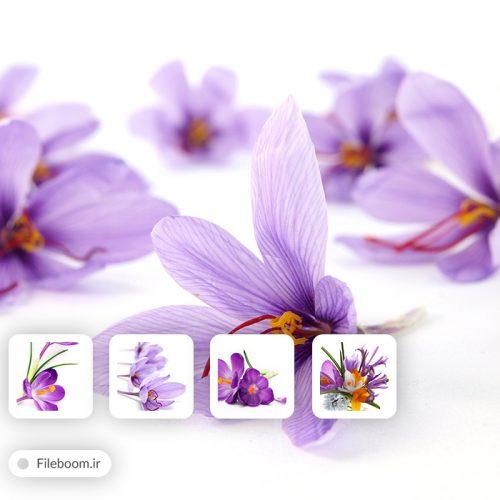 مجموعه تصاویر با کیفیت با موضوع زعفران