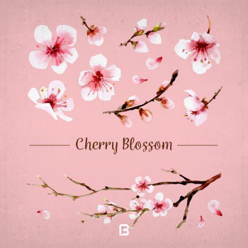 وکتور شکوفه و شاخه درخت گیلاس