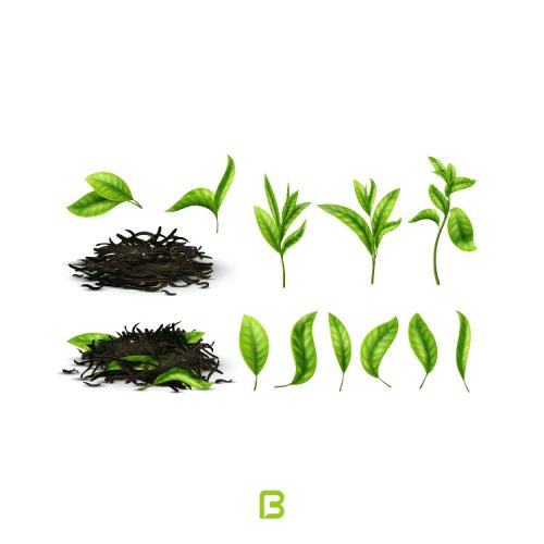 13 وکتور برگ سبز چای
