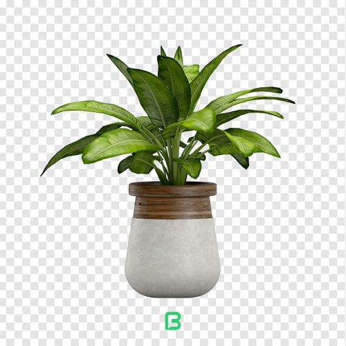 عکس بدون پس زمینه گلدان گیاه - کد 02