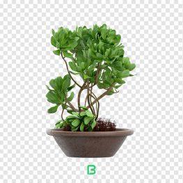 عکس بدون پس زمینه گلدان گیاه – کد 06