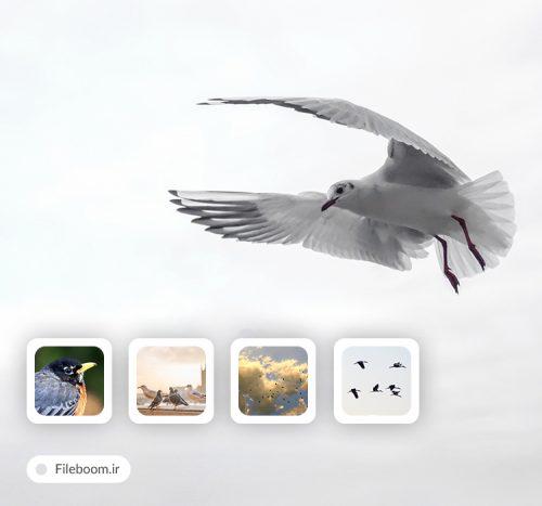5Birds photos 45781 500x467 - ۵Birds_photos_45781